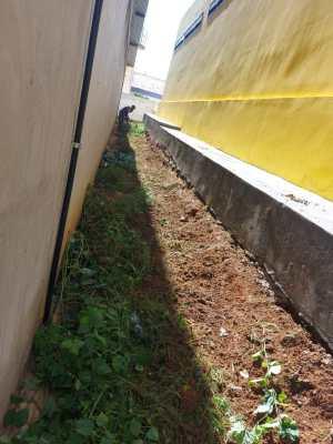 Bairro-Bernardino-Lemos-1-1-300x400 Secretaria de infraestrutura realiza completa limpeza em terrenos no bairro Bernardino Lemos