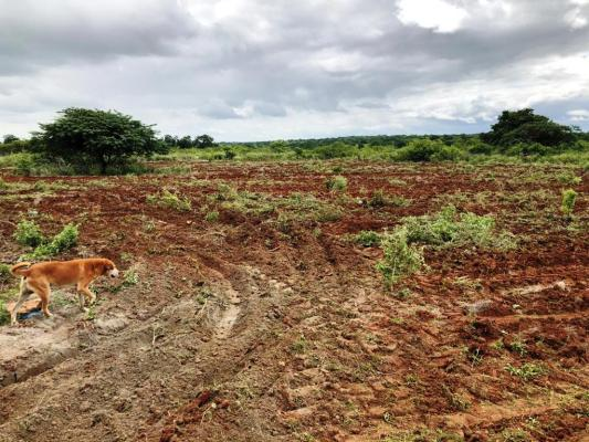 Corte-de-terra1-533x400 Secretaria de Agricultura realiza ações de corte de terra em várias comunidades rurais