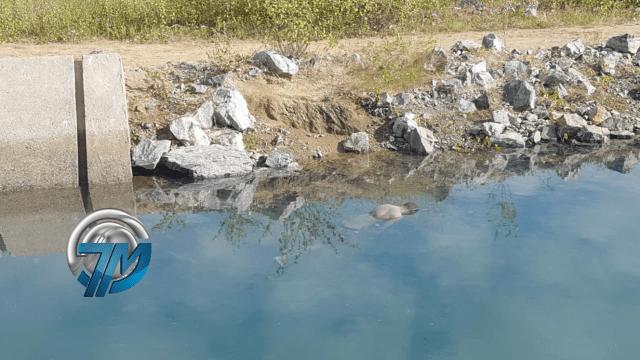 afogado Corpo de homem é encontrado boiando no canal da transposição em Sertânia