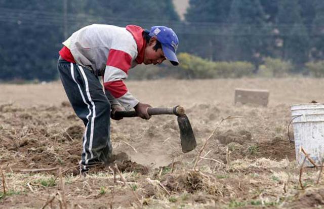 Casi la mitad de los trabajadores del país está en la informalidad