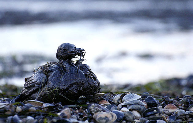 Consecuencias de un derrame de petróleo - Foto: web
