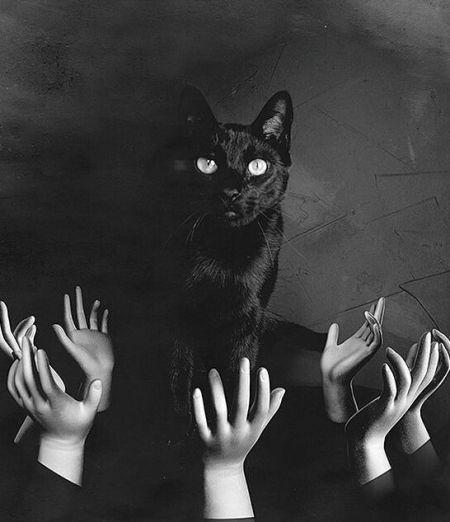 google.ro 140511-Creepy-Black-Cat