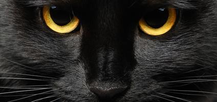 google.ro black-cat-eyes-close-up