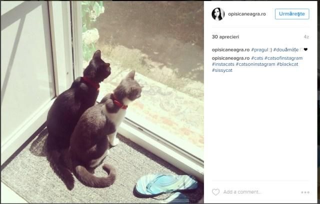 opisicaneagra on instagram