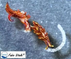 Hermaea variopicta by Fabio Vitale (www.salentosommerso.it)