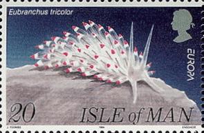 stamp Isle of Man - Eubranchus tricolor