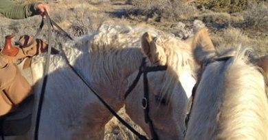 Mit den Pferden unterwegs