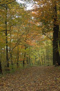 Herbst im Wald
