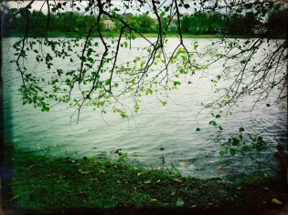 Noch hängen einige Blätter an den Bäumen am Aasee
