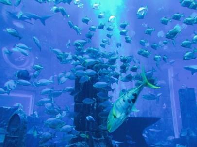 Im Aquarium in Dubai