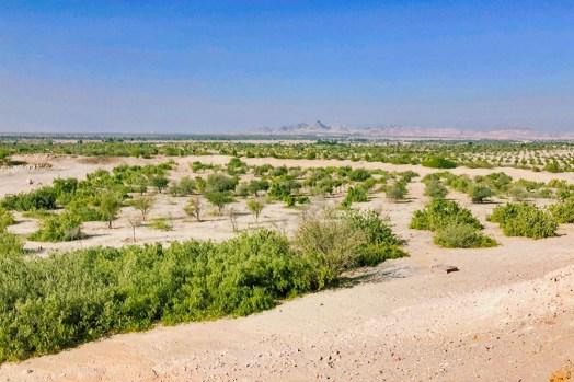 Karge Landschaft auf Sir Bani Yas