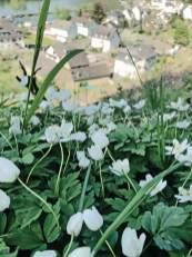 Viel Natur in Brodenbach