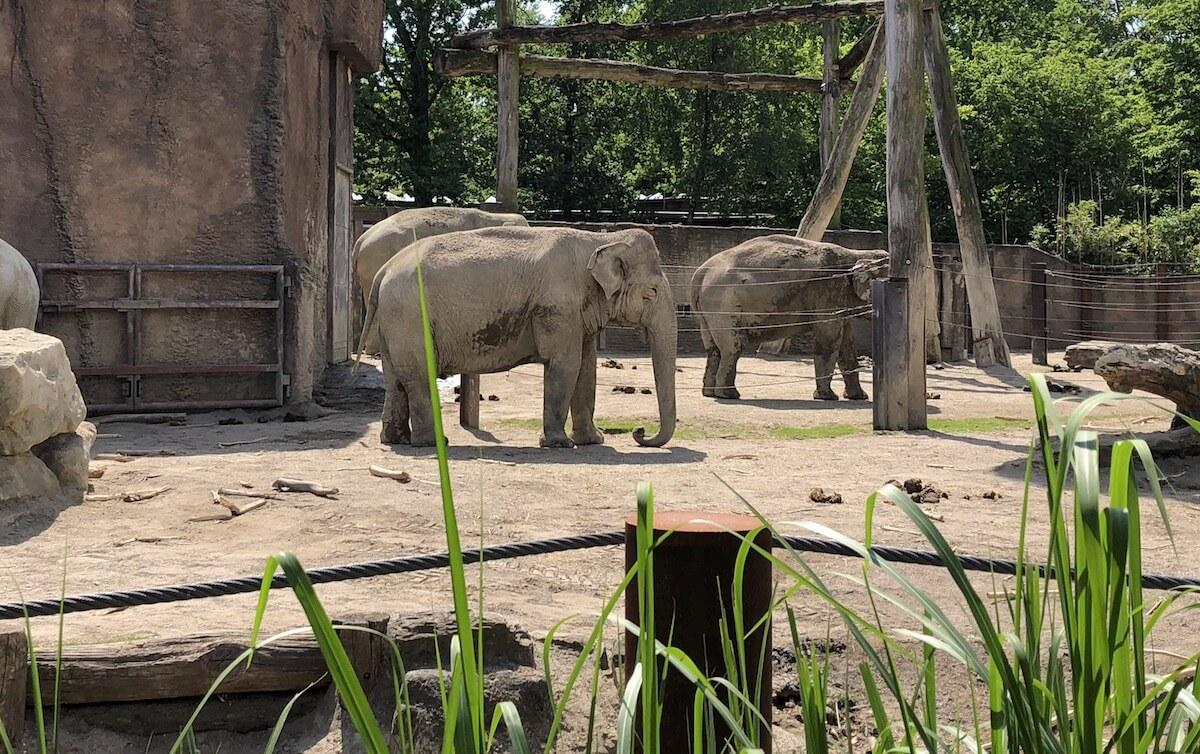 Elefantenherde im Zoo