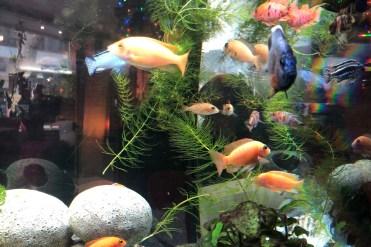 Aquarium im Cyclo