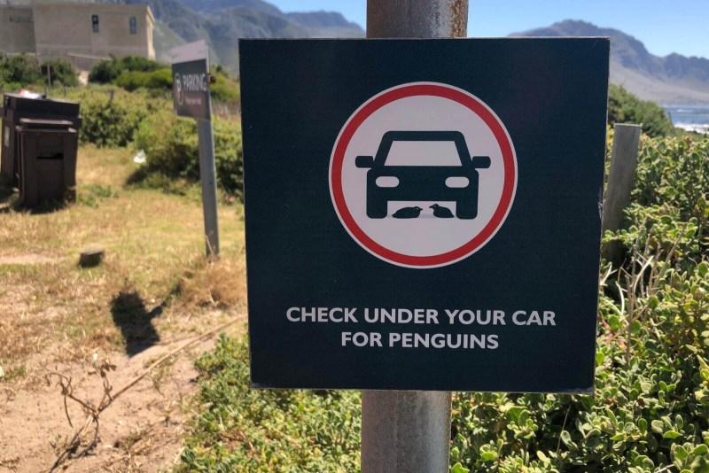 Tipp für Südafrika: Immer auf die Pinguine achten.