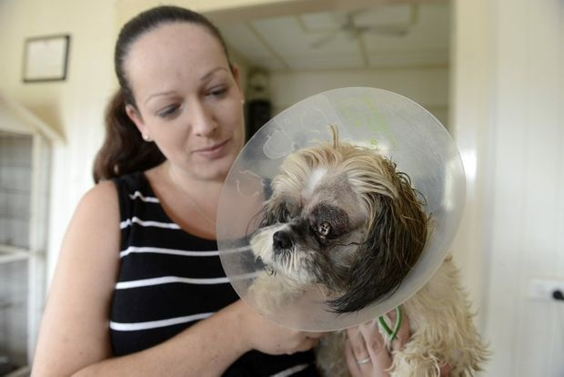 This woman received an anonymous donation from a complete stranger so that her dog, Gizmo, could have an emergency eye surgery.