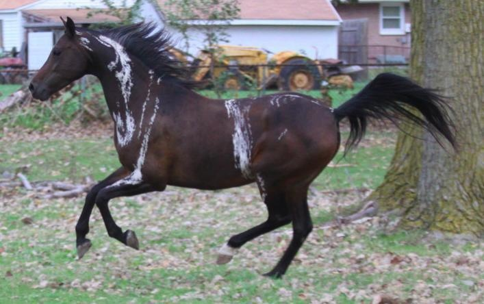 This gorgeous horse has some pretty odd markings, too.