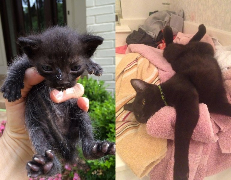 """Reddit user says, """"Found abandoned in the gutter at 2 weeks old. Now fat and happy!!"""""""