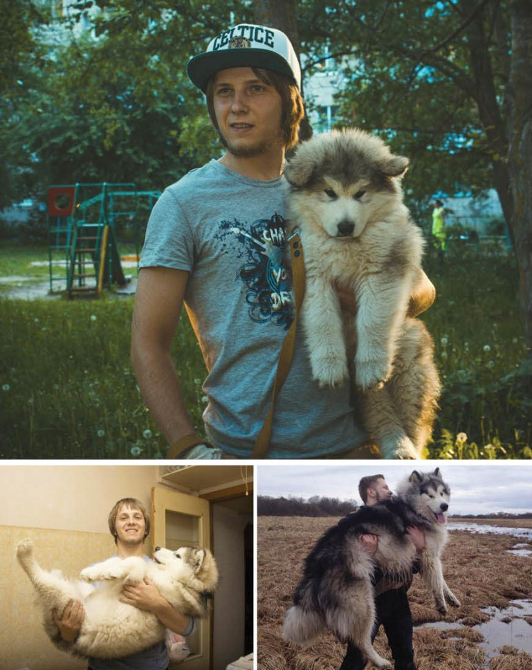 The evolution of a furry beast.