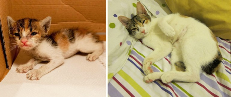 A rescued kitten receives love and care into adulthood.