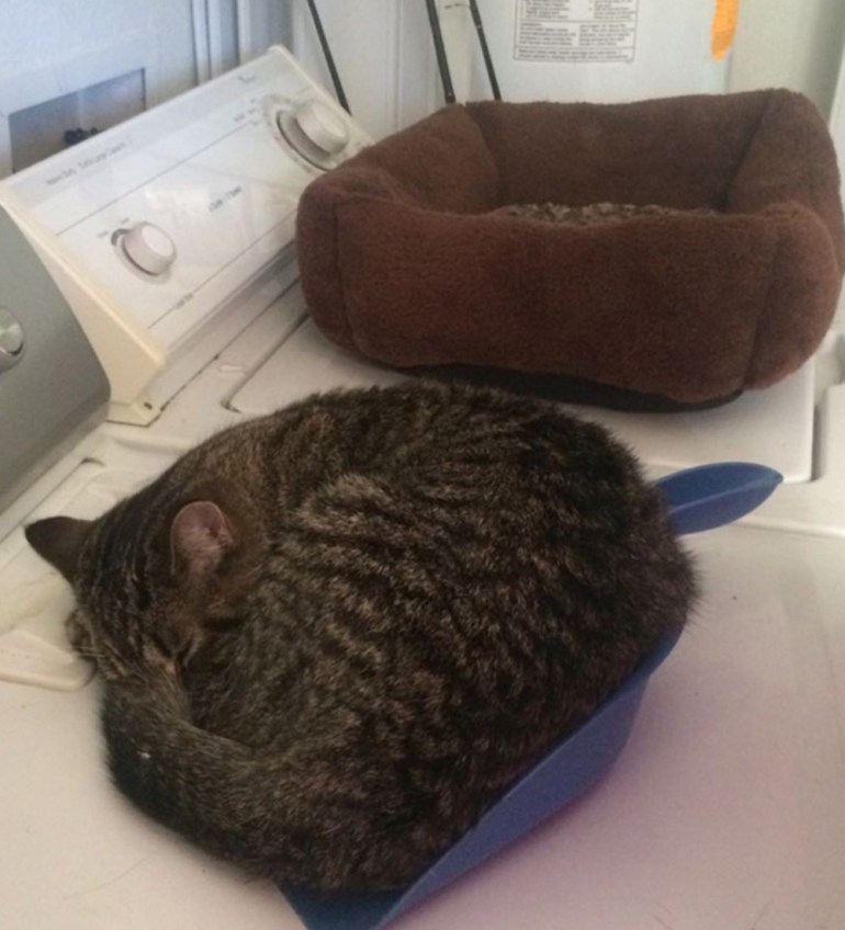 This lady got a $25 cat bed, then opted to sleep in the dustpan.