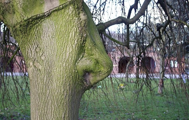 This tree just so happened to grow a nose.