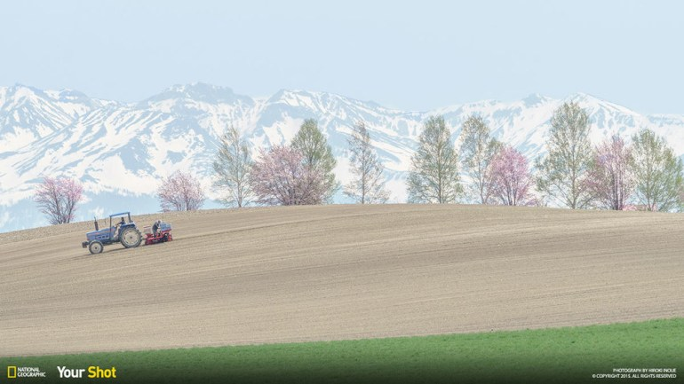 Farmers cultivating land surrounded by sakura blossoms.