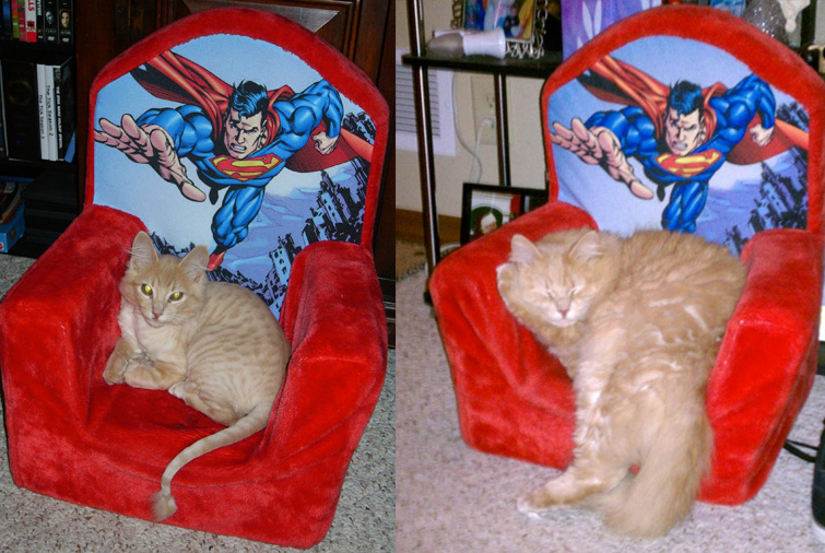 Super cat is lookin' pretty super.