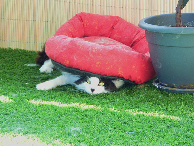 And this cat doesn't seem to understand how beds work.
