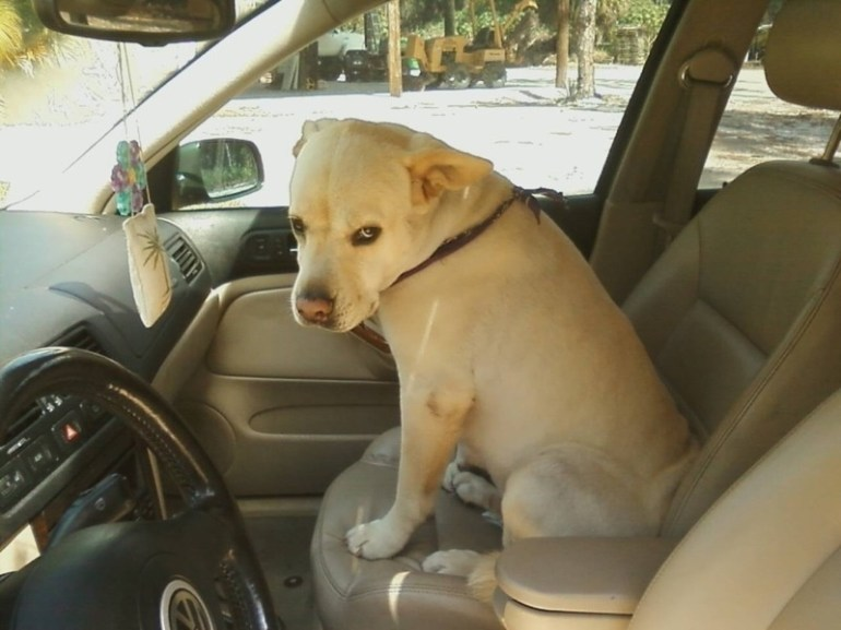 """I told you that I wanted to drive today."""