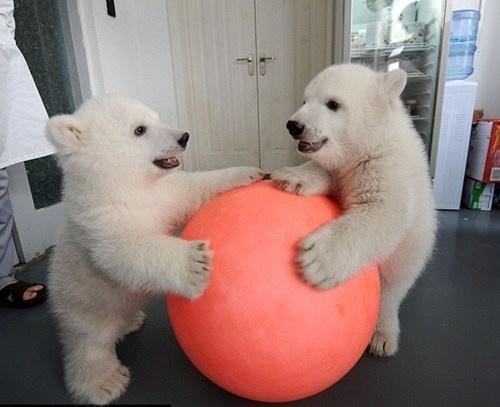 """""""It's mine!"""""""