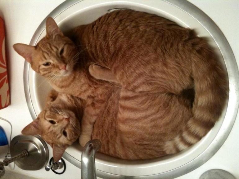In sink.