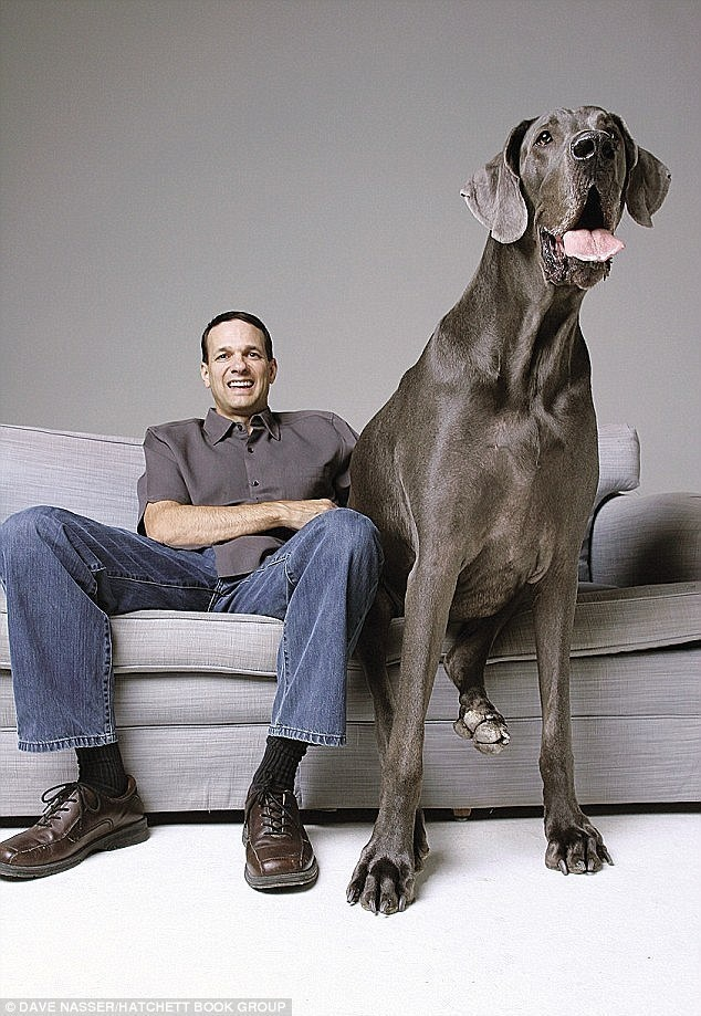 Giant George: 43 inch tall and 245 pound Great Dane from Arizona.
