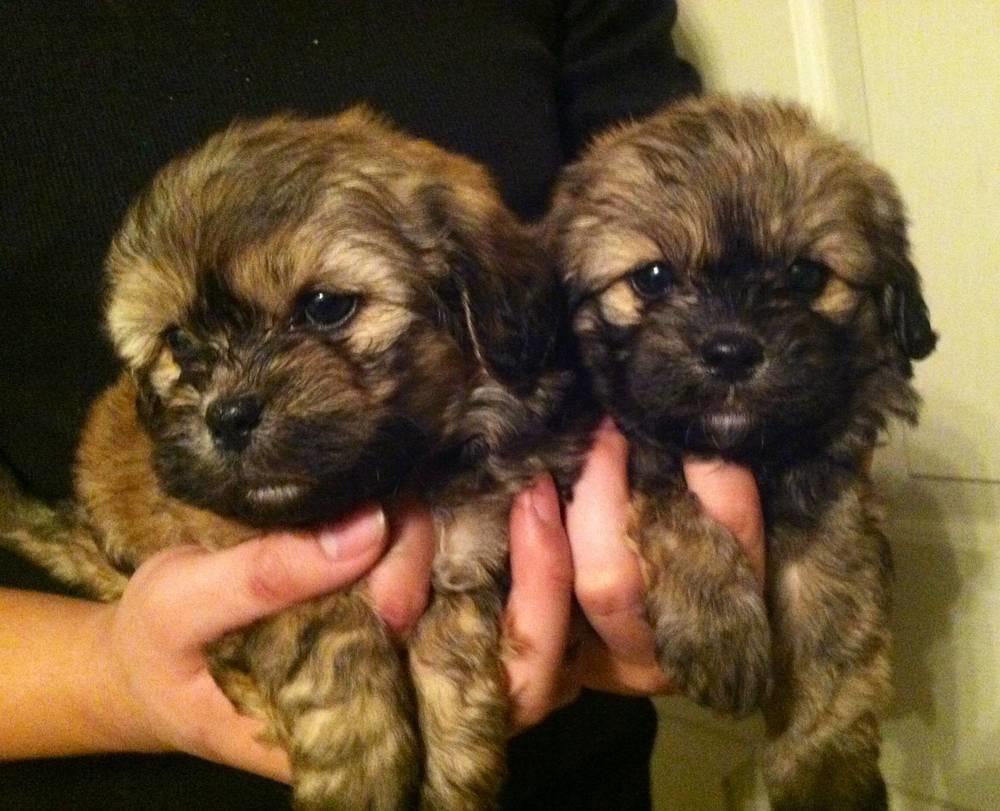Oh, hello Cutie #1 and Cutie #2.
