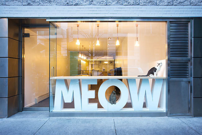 Meow Parlour opened in 2014 in New York. Although, cat cafés are popular in Asia and Europe.