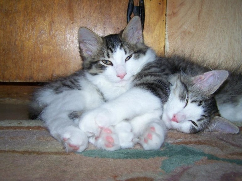 Sleepy faces and pink paws.