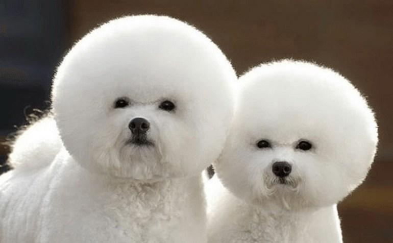 I hereby name you Cottonball and Snowball.