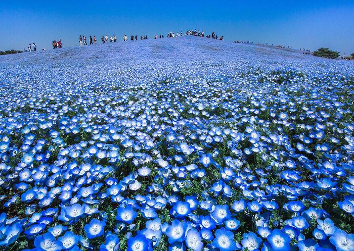 Blue Heaven, Japan