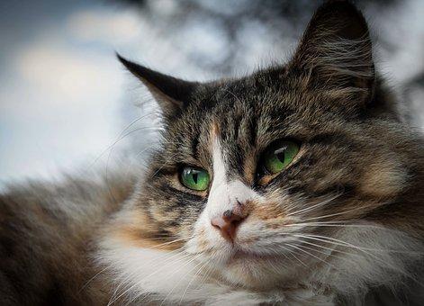 Prendre soin de son chat sénior