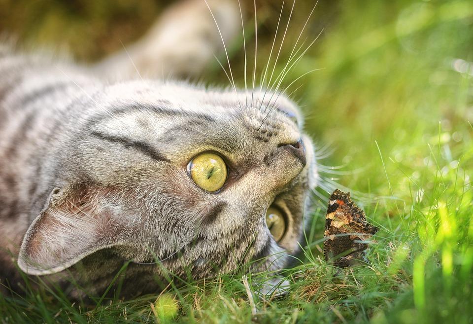 La litière et bac à chat, lequel choisir