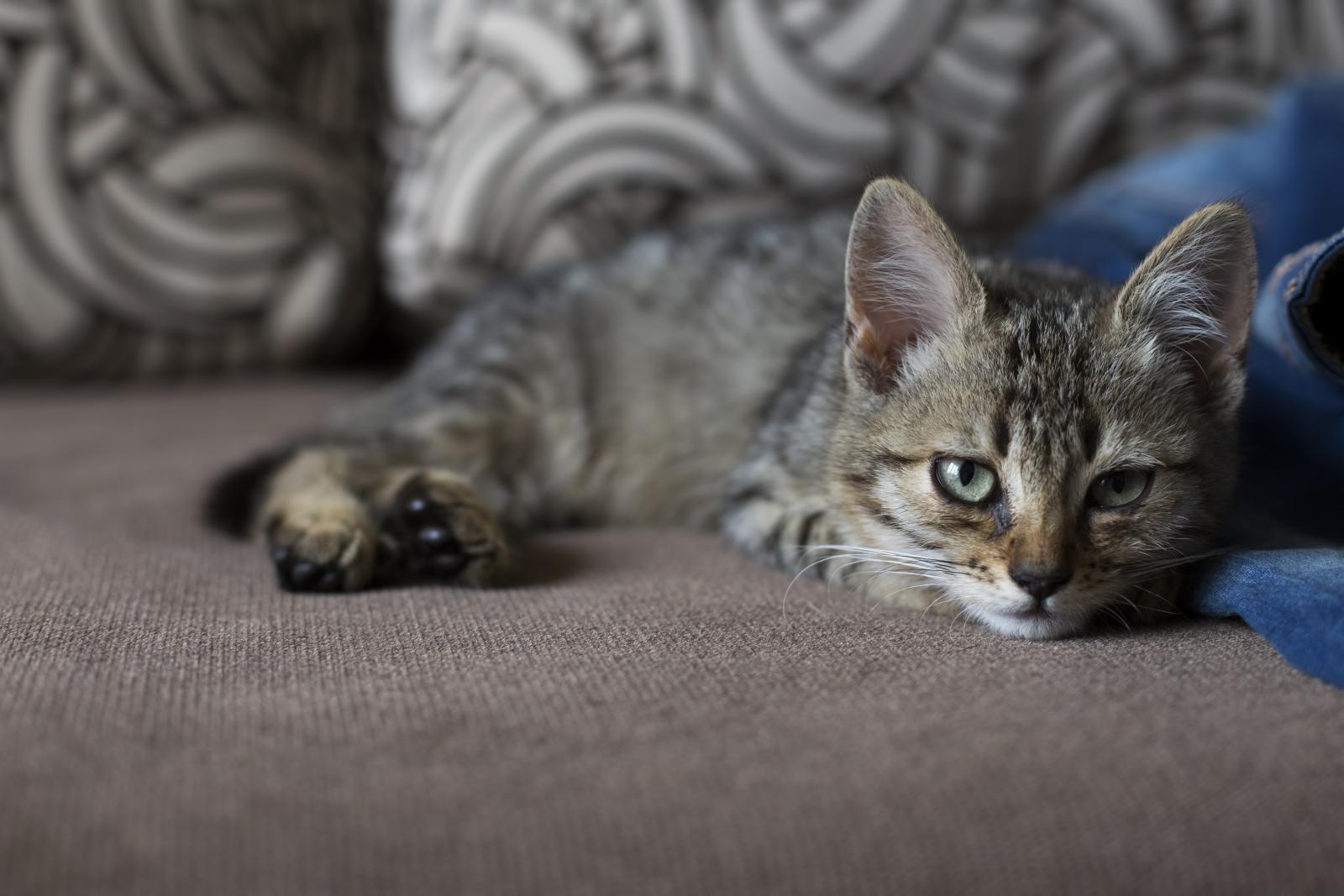 Les chats face aux maladies de l'automne