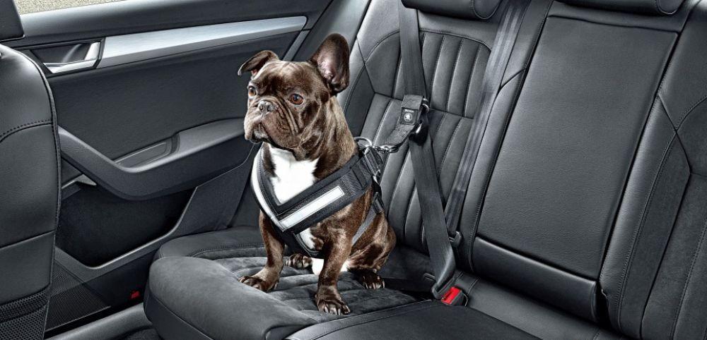 Uberpet, le nouveau concept d'Uber pour voyager avec son animal de compagnie