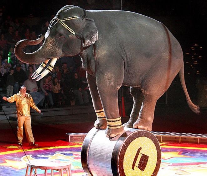 Animaux de cirque : le purgatoire des animaux, un réalisme à découvrir absolument