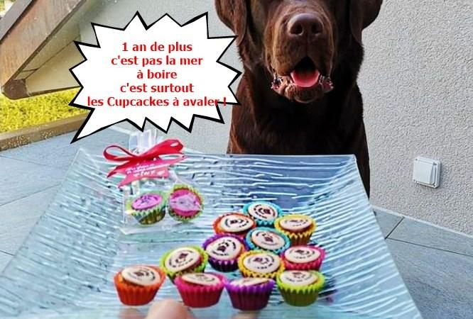cakes chiens