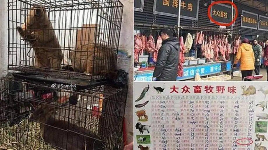 Coronavirus : les Chinois rouvrent des marchés d'animaux sauvages