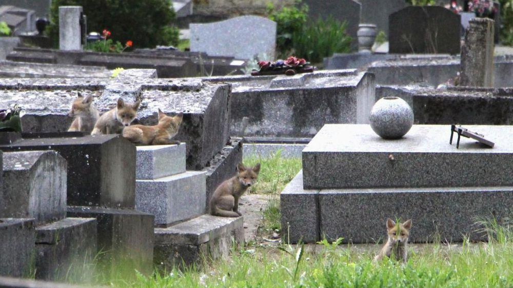 les-renards-du-pére-lachaise