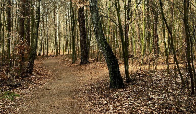 Las. Gdynatura jest modlitwą