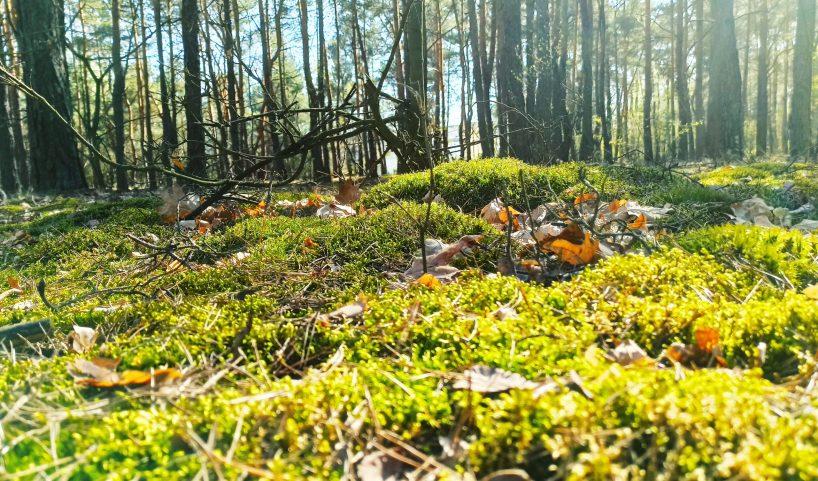 Las. Daj odpocząć oczom