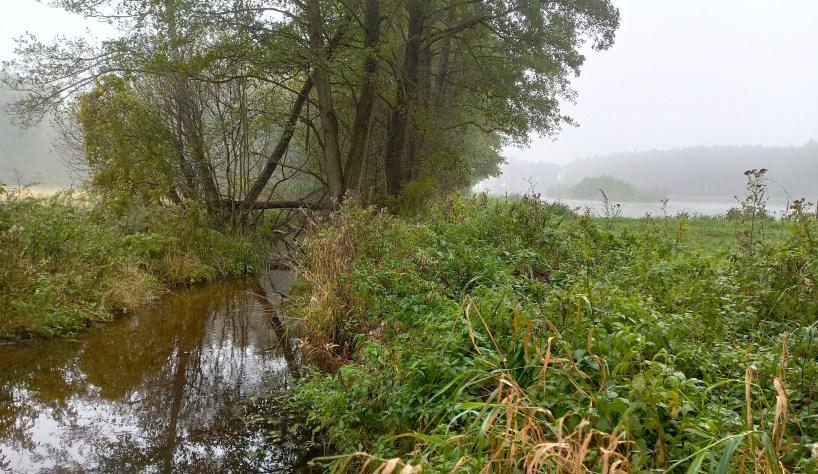 Natura odzyskuje wioskę