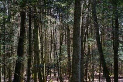 Las okolic Tuszyna dla zdrowia izmysłów ukojenia